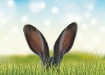 2018 Canadian Labour Law Posters Get an Easter Update